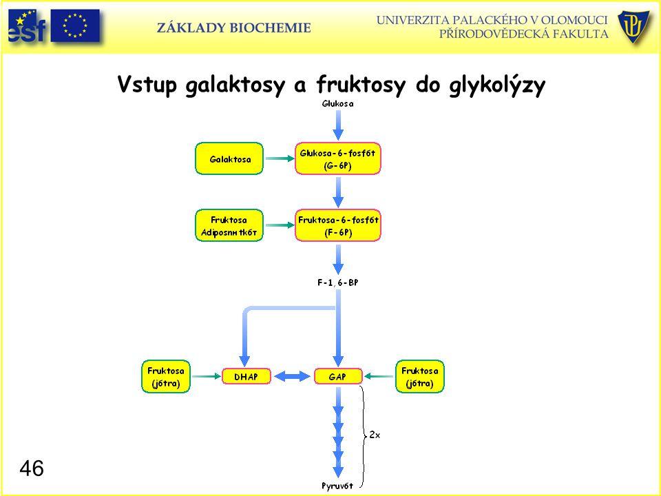 Vstup galaktosy a fruktosy do glykolýzy