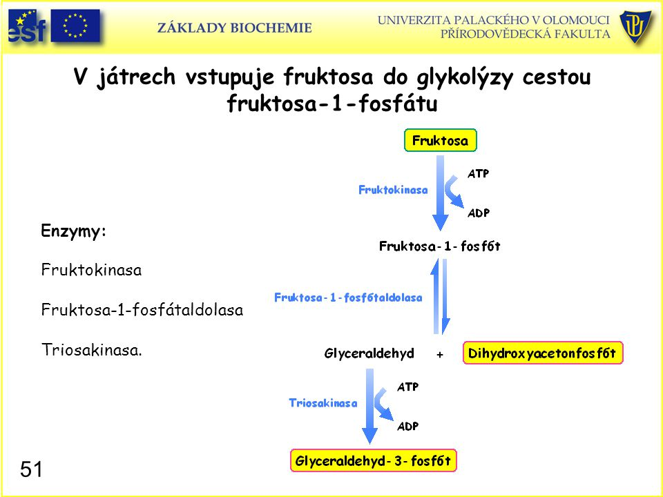 V játrech vstupuje fruktosa do glykolýzy cestou fruktosa-1-fosfátu