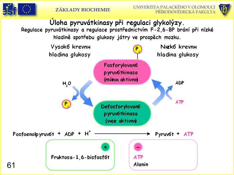 Úloha pyruvátkinasy při regulaci glykolýzy
