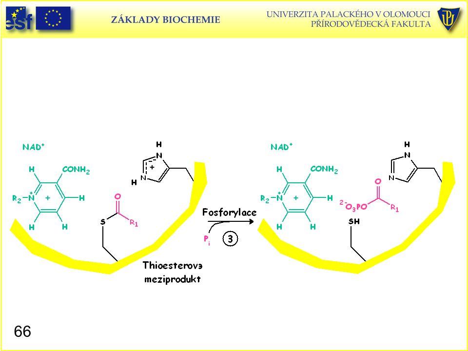 Glyceraldehyd-3-fosfátdehydrogenasa, mechanismus působení 5