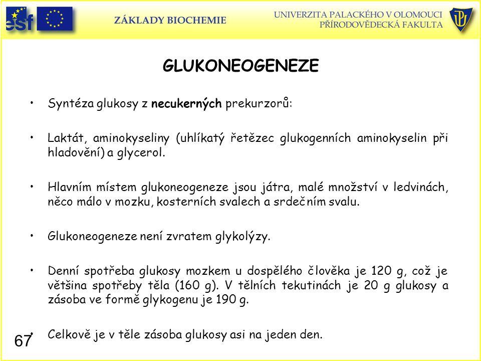 GLUKONEOGENEZE Syntéza glukosy z necukerných prekurzorů:
