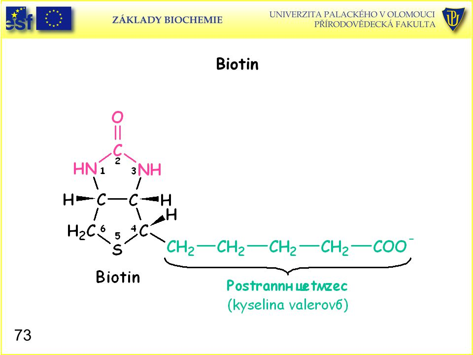Biotin Biotin, struktura