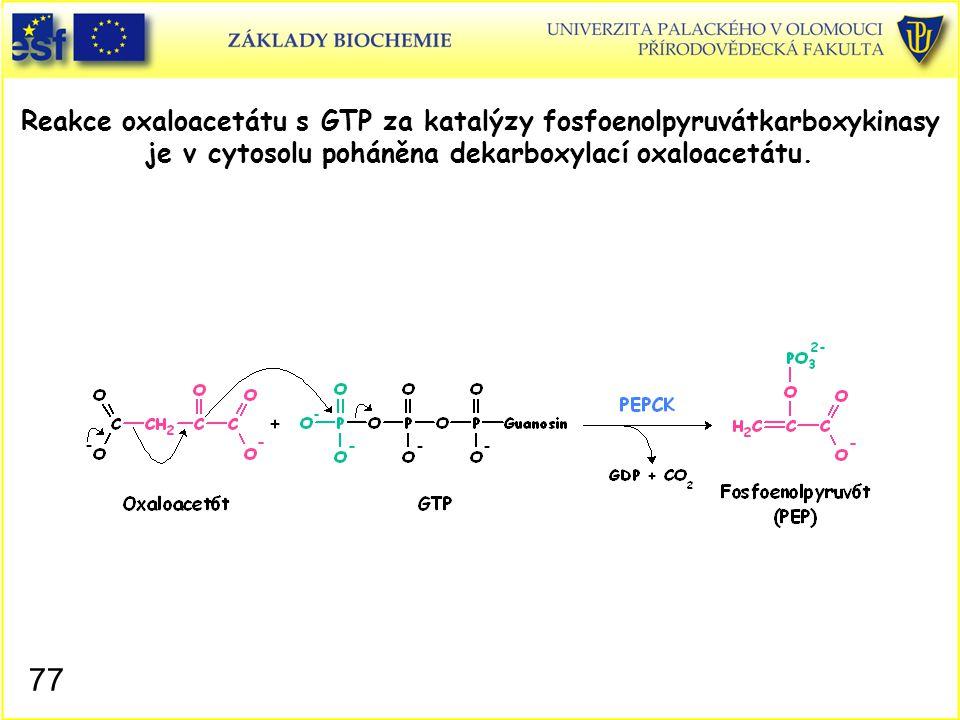 Reakce oxaloacetátu s GTP za katalýzy fosfoenolpyruvátkarboxykinasy je v cytosolu poháněna dekarboxylací oxaloacetátu.