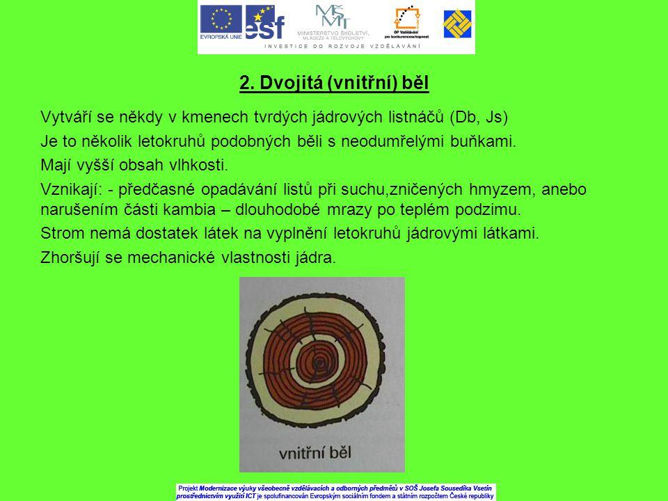 2. Dvojitá (vnitřní) běl Vytváří se někdy v kmenech tvrdých jádrových listnáčů (Db, Js)