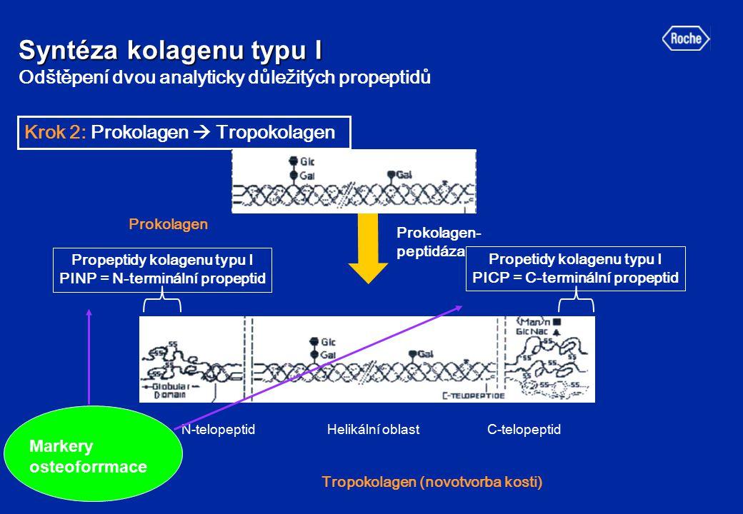 Syntéza kolagenu typu I