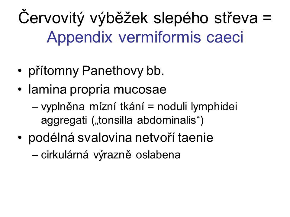 Červovitý výběžek slepého střeva = Appendix vermiformis caeci