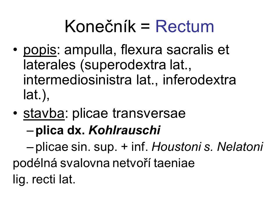 Konečník = Rectum popis: ampulla, flexura sacralis et laterales (superodextra lat., intermediosinistra lat., inferodextra lat.),