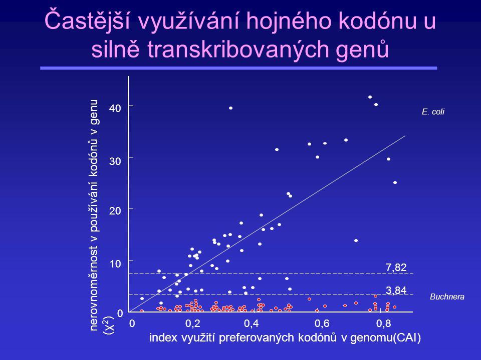 Častější využívání hojného kodónu u silně transkribovaných genů
