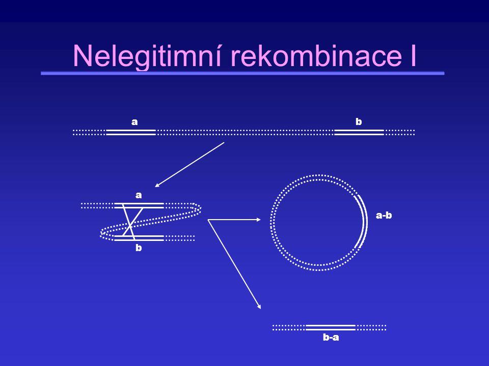 Nelegitimní rekombinace I