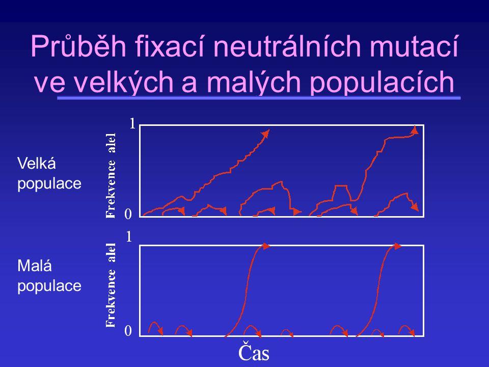 Průběh fixací neutrálních mutací ve velkých a malých populacích