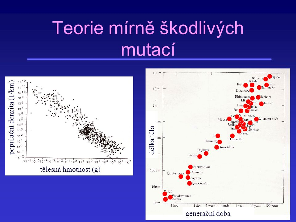 Teorie mírně škodlivých mutací
