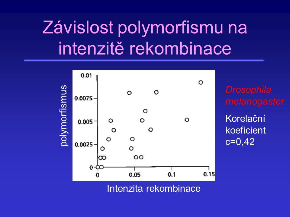 Závislost polymorfismu na intenzitě rekombinace