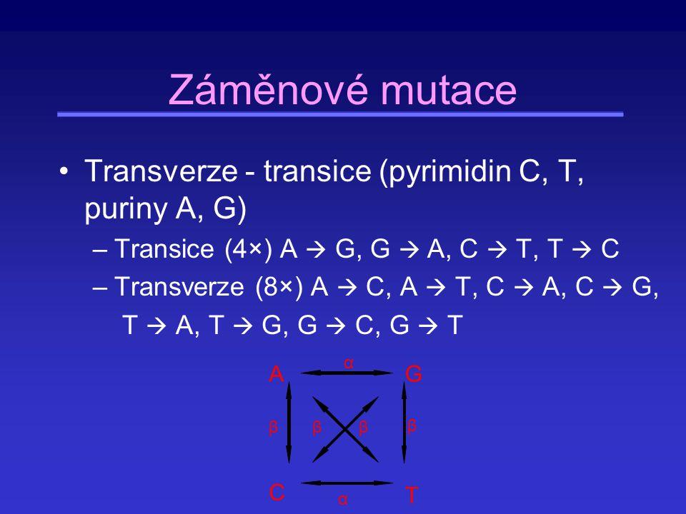 Záměnové mutace Transverze - transice (pyrimidin C, T, puriny A, G)