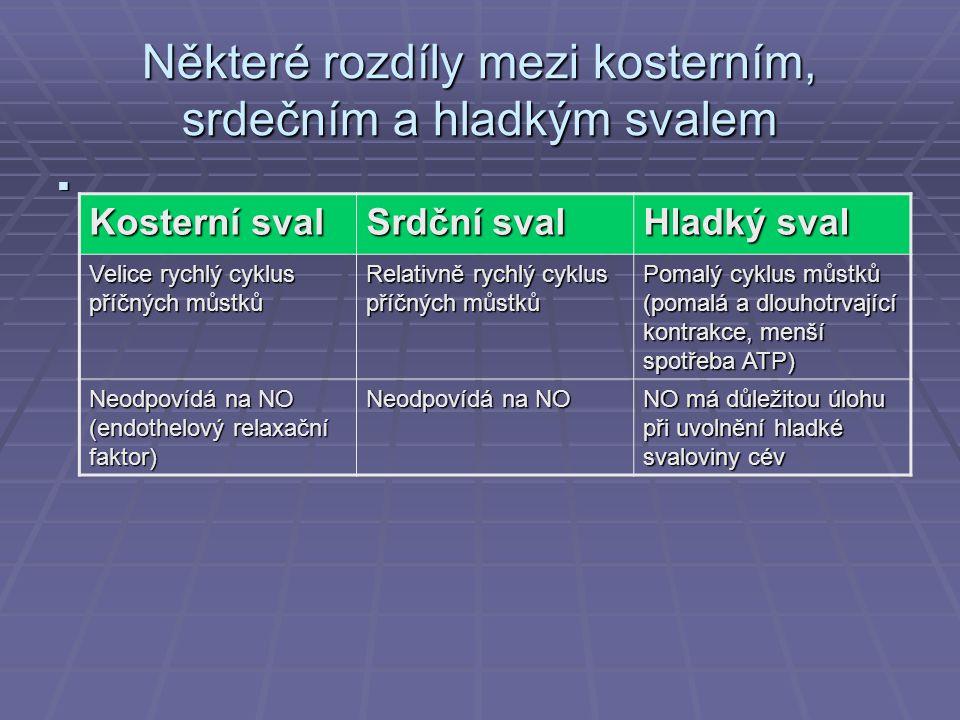 Některé rozdíly mezi kosterním, srdečním a hladkým svalem