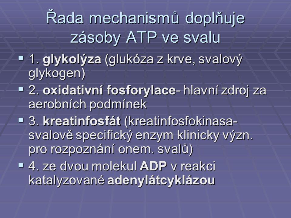Řada mechanismů doplňuje zásoby ATP ve svalu