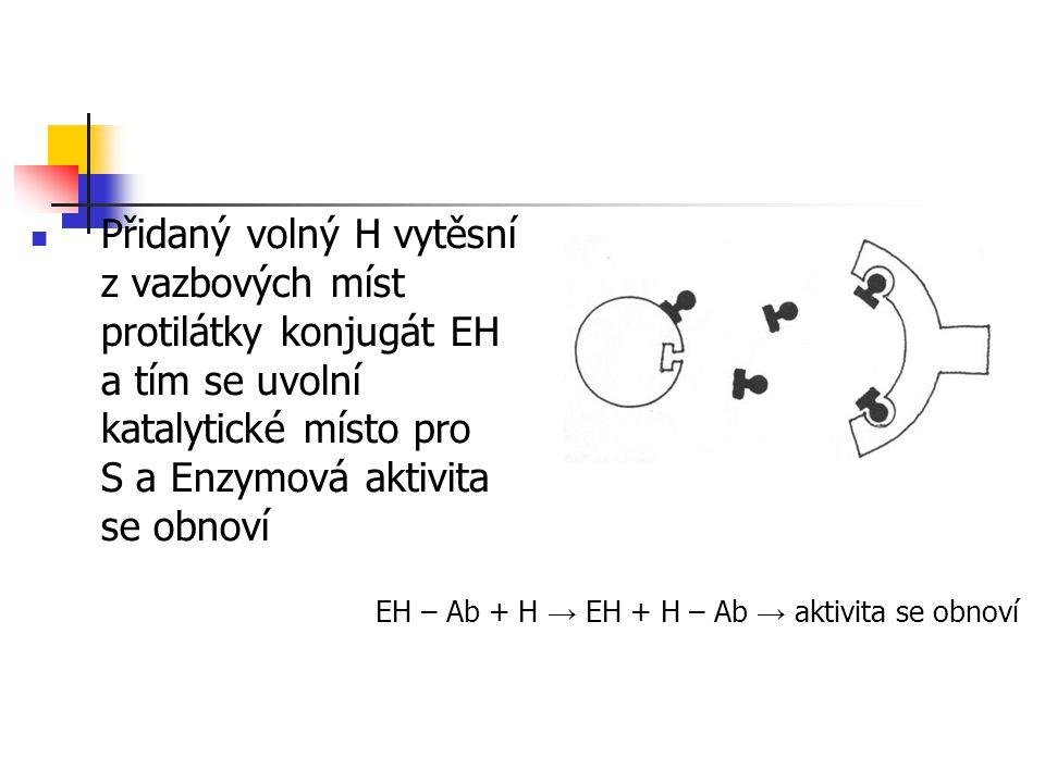 Přidaný volný H vytěsní z vazbových míst protilátky konjugát EH a tím se uvolní katalytické místo pro S a Enzymová aktivita se obnoví