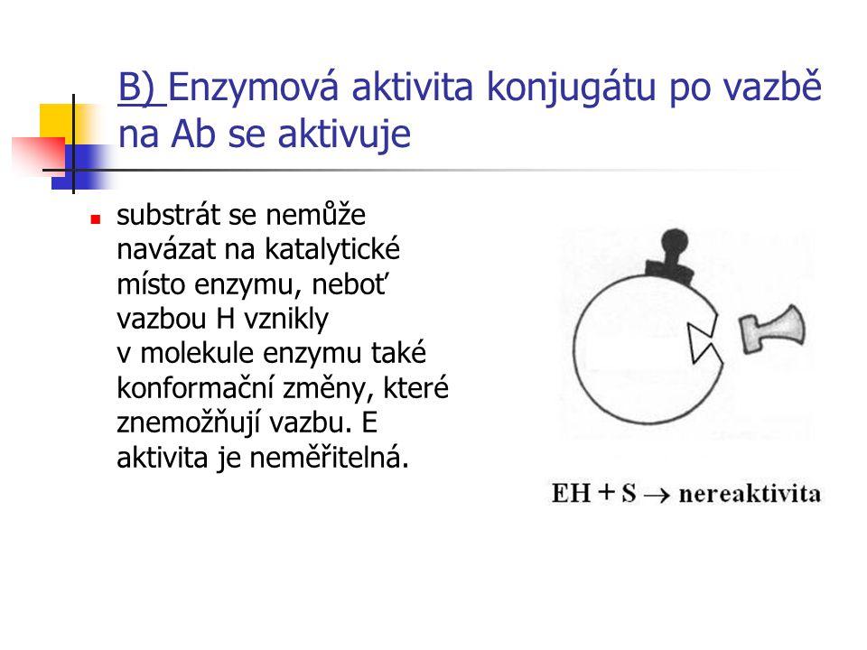 B) Enzymová aktivita konjugátu po vazbě na Ab se aktivuje
