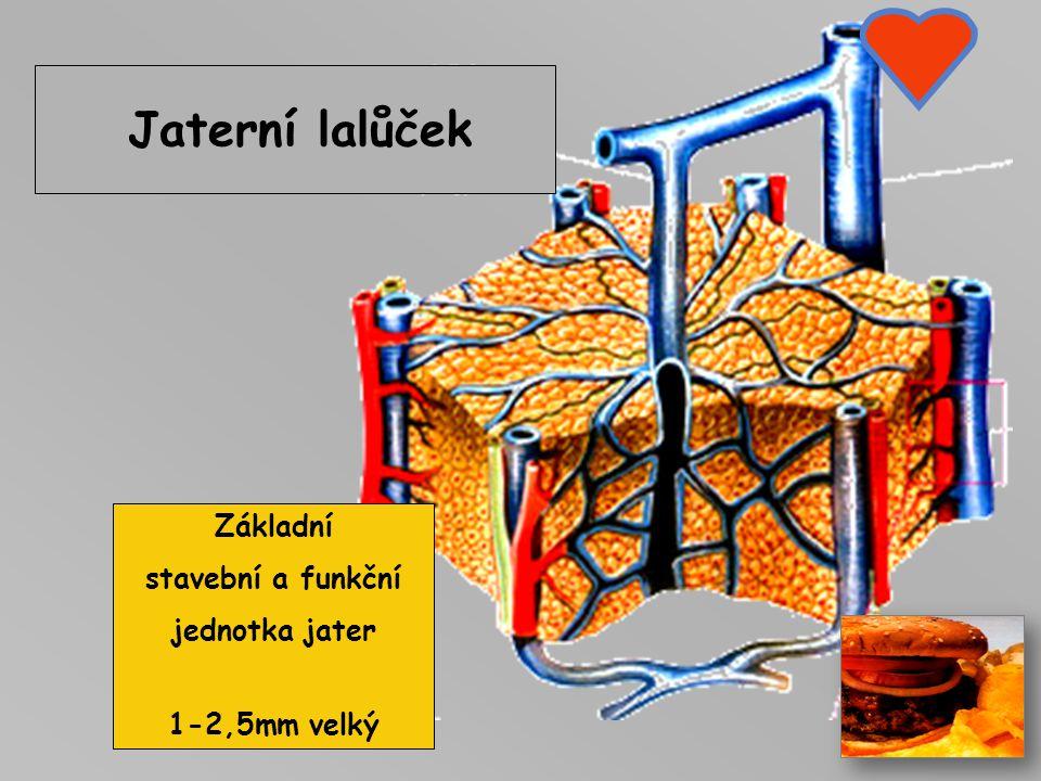 Základní stavební a funkční jednotka jater 1-2,5mm velký
