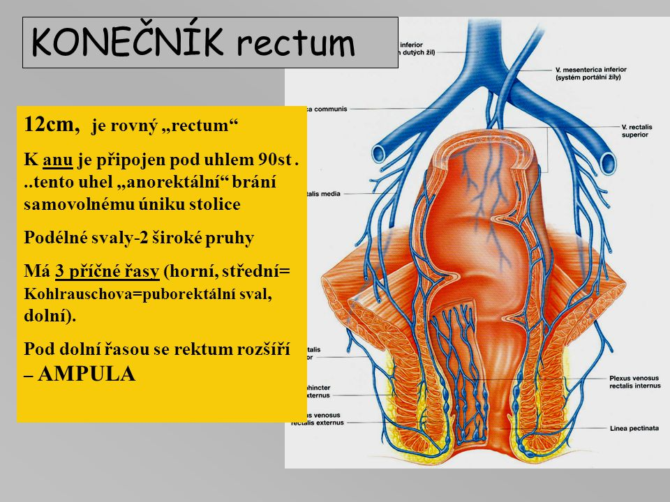 "KONEČNÍK rectum 12cm, je rovný ""rectum"