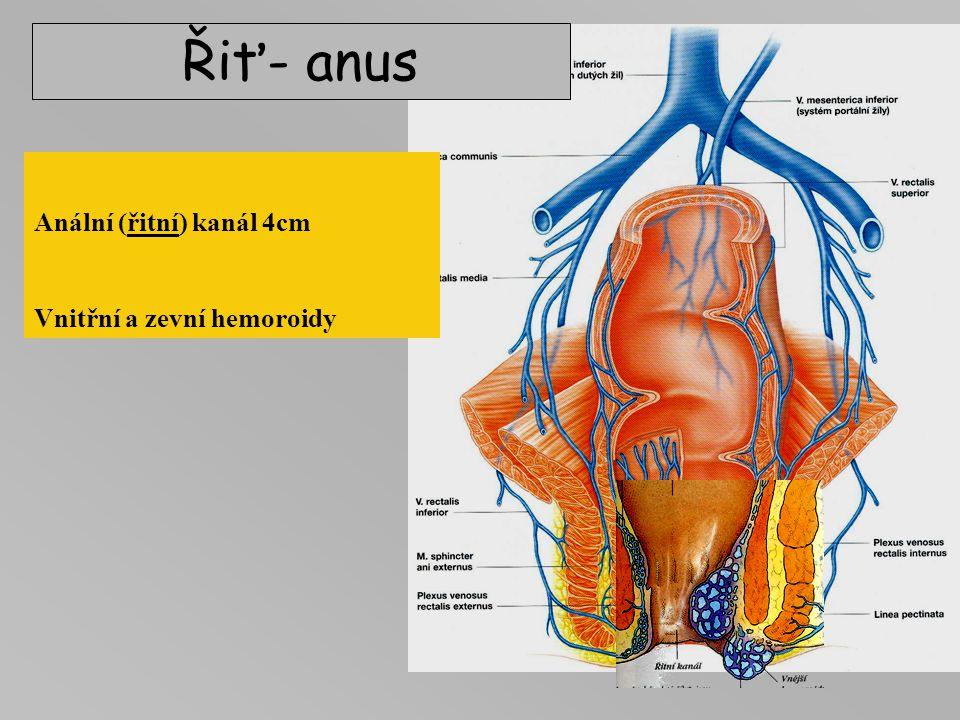 Řiť- anus Anální (řitní) kanál 4cm Vnitřní a zevní hemoroidy