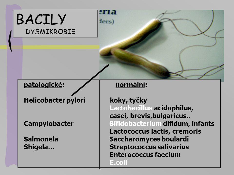 BACILY DYSMIKROBIE patologické: normální: