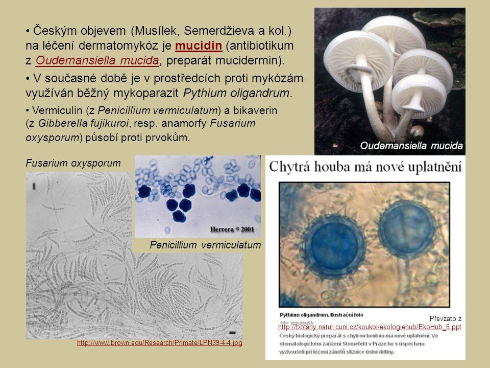 • Českým objevem (Musílek, Semerdžieva a kol