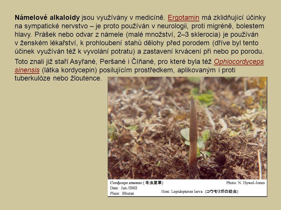 Námelové alkaloidy jsou využívány v medicíně