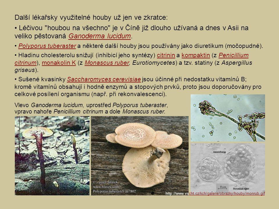 Další lékařsky využitelné houby už jen ve zkratce: