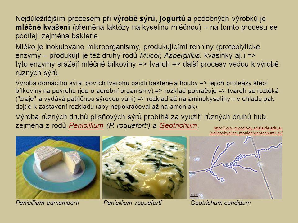 Nejdůležitějším procesem při výrobě sýrů, jogurtů a podobných výrobků je mléčné kvašení (přeměna laktózy na kyselinu mléčnou) – na tomto procesu se podílejí zejména bakterie.
