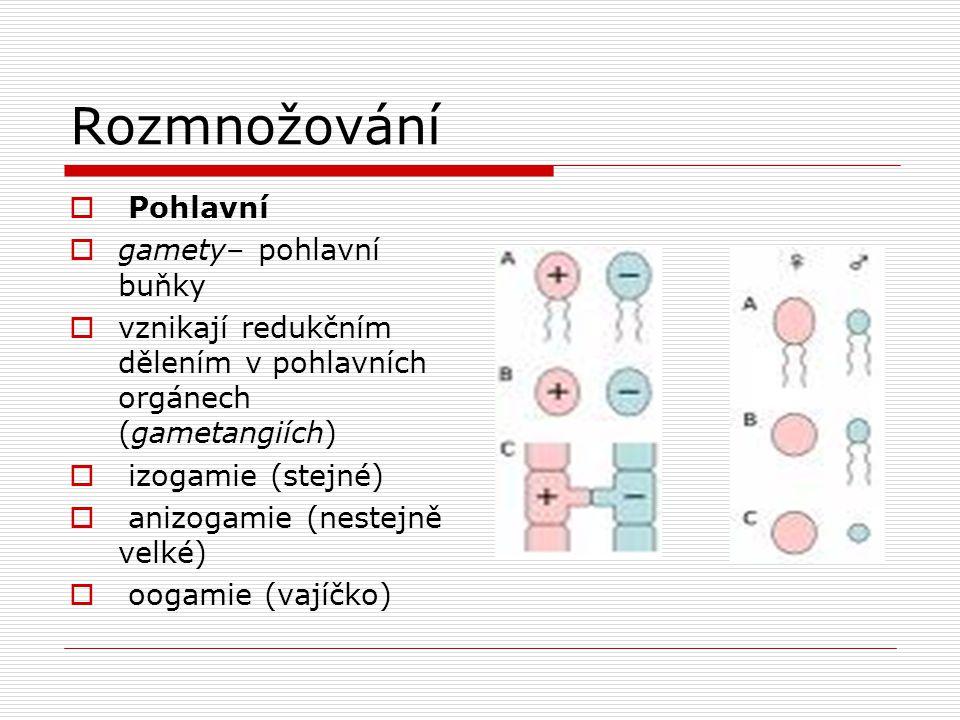 Rozmnožování Pohlavní gamety– pohlavní buňky