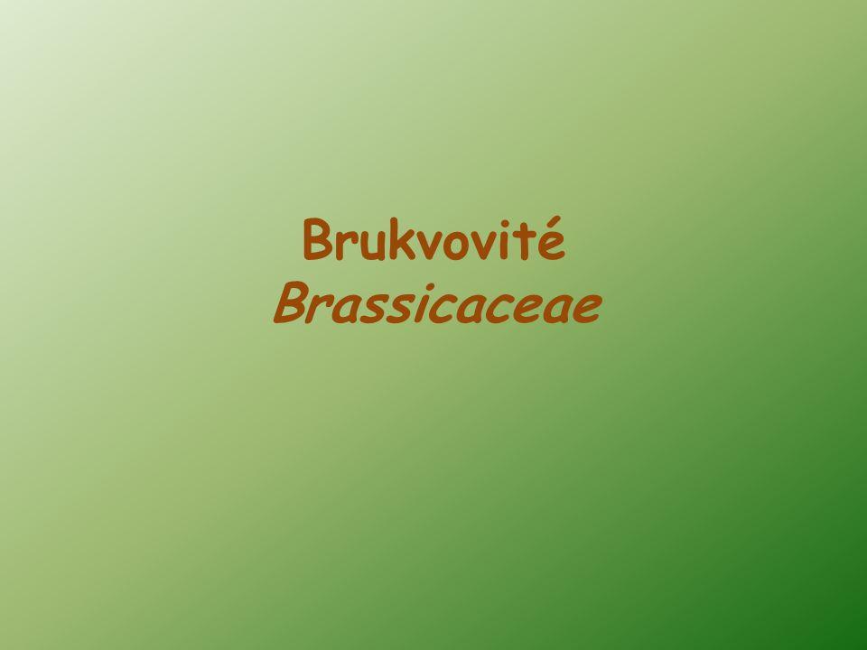 Brukvovité Brassicaceae