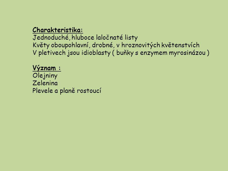 Charakteristika: Jednoduché, hluboce laločnaté listy. Květy oboupohlavní, drobné, v hroznovitých květenstvích.