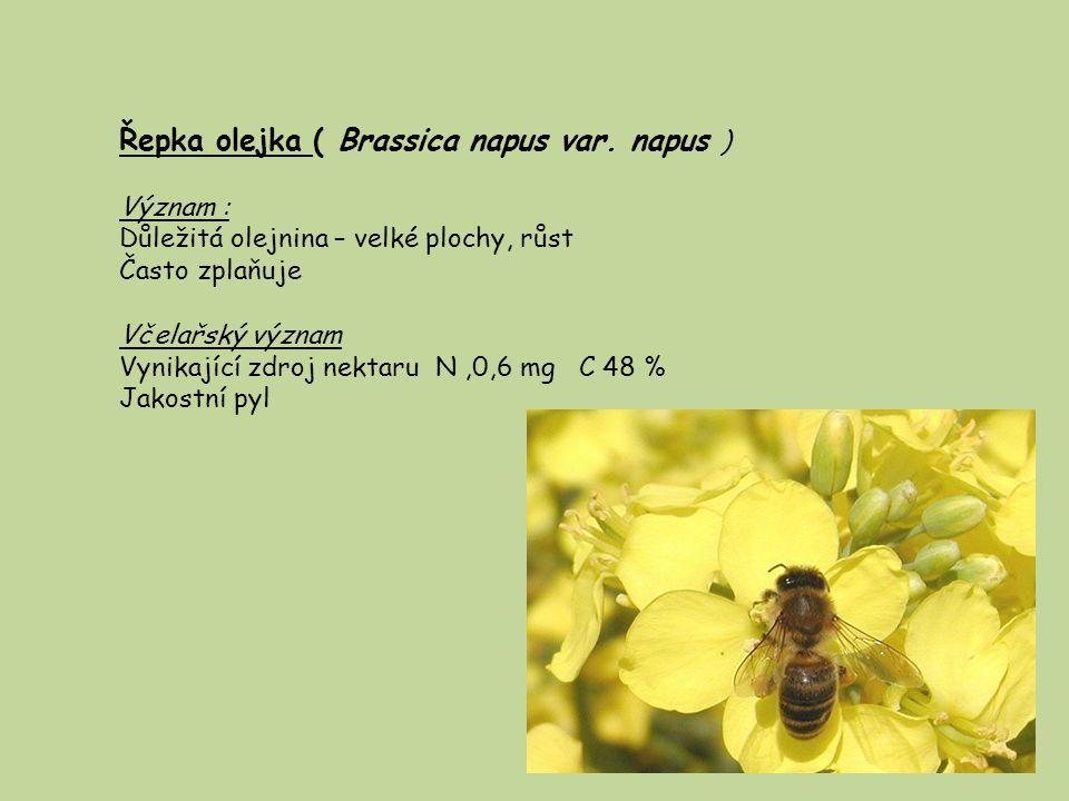 Řepka olejka ( Brassica napus var. napus )