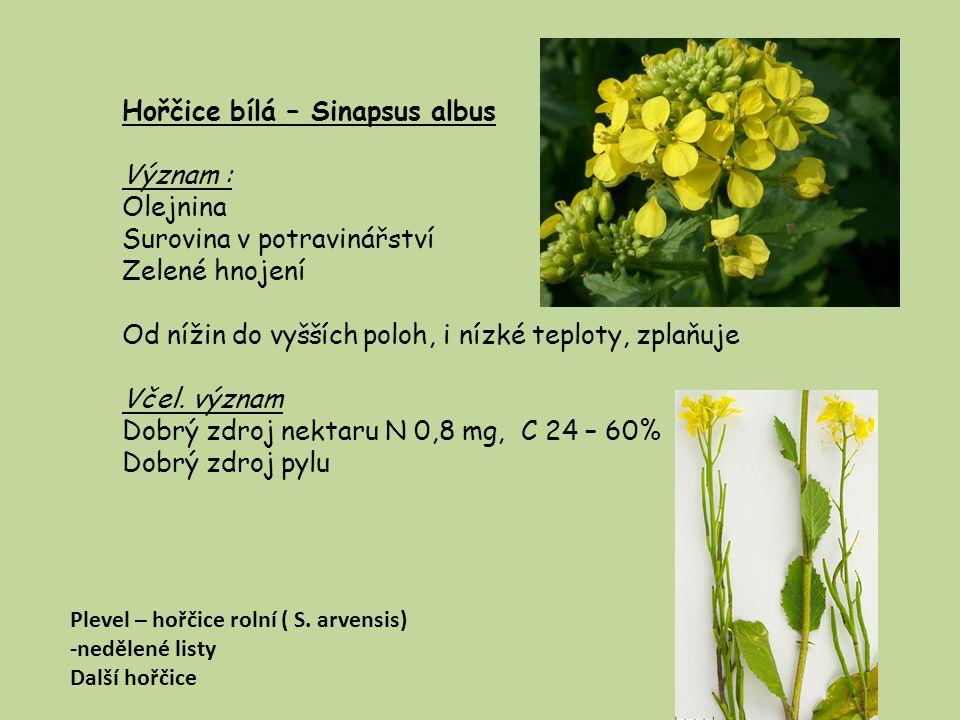 Hořčice bílá – Sinapsus albus Význam : Olejnina