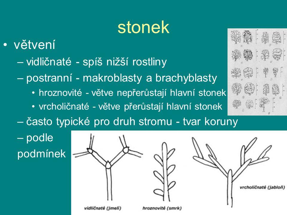 stonek větvení vidličnaté - spíš nižší rostliny
