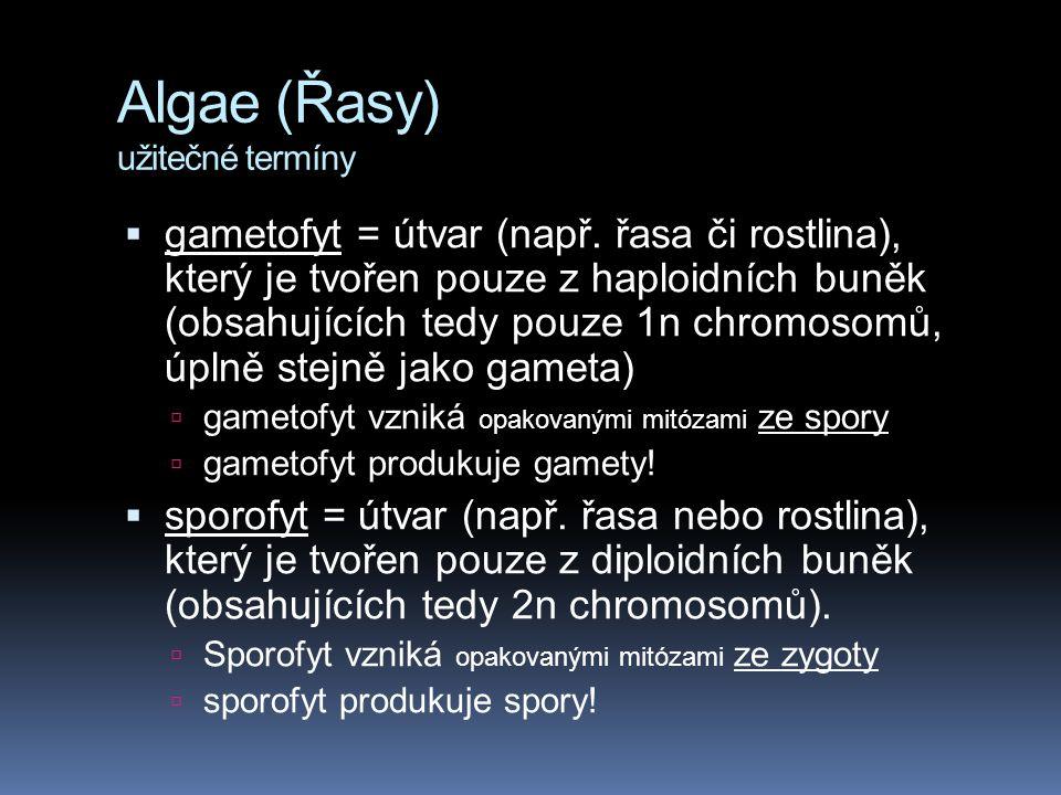 Algae (Řasy) užitečné termíny