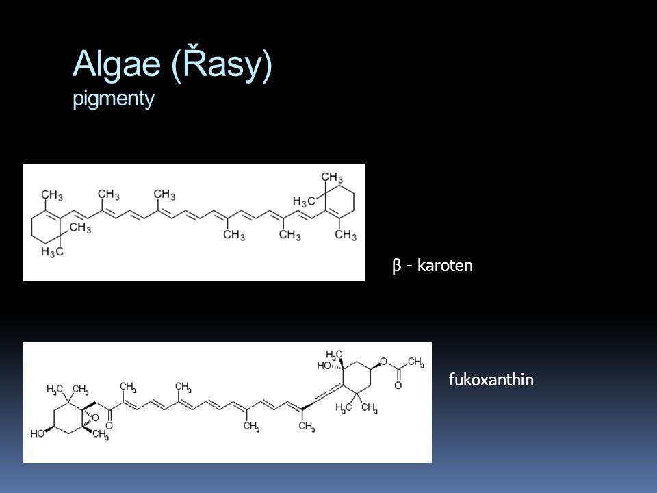 Algae (Řasy) pigmenty β - karoten fukoxanthin