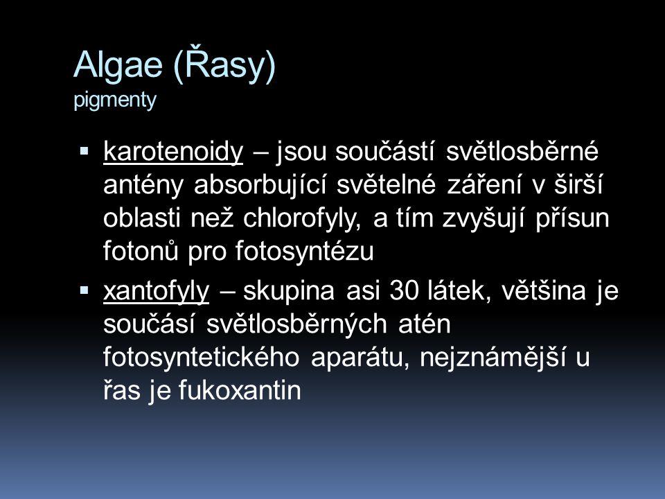Algae (Řasy) pigmenty