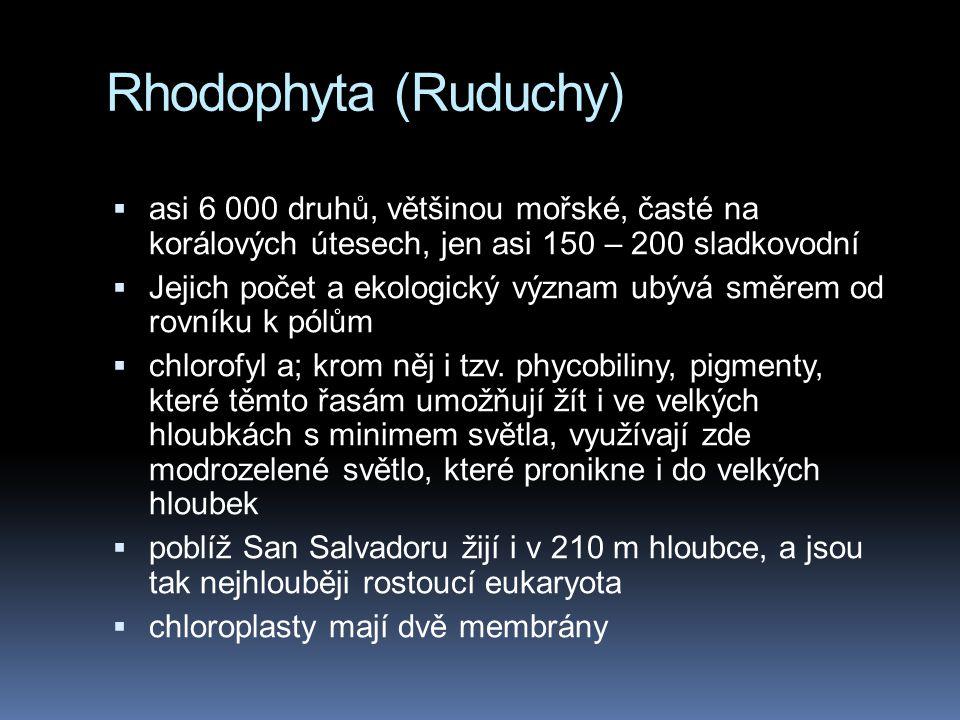 Rhodophyta (Ruduchy) asi 6 000 druhů, většinou mořské, časté na korálových útesech, jen asi 150 – 200 sladkovodní.