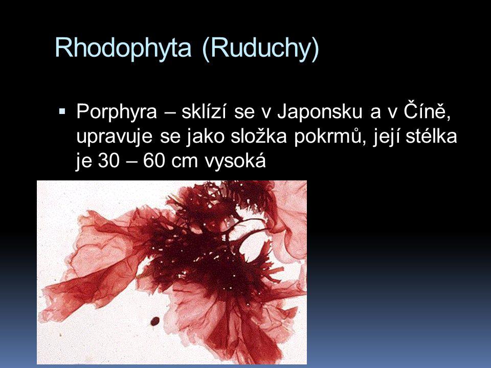Rhodophyta (Ruduchy) Porphyra – sklízí se v Japonsku a v Číně, upravuje se jako složka pokrmů, její stélka je 30 – 60 cm vysoká.