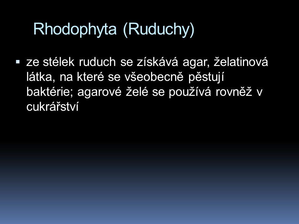 Rhodophyta (Ruduchy)