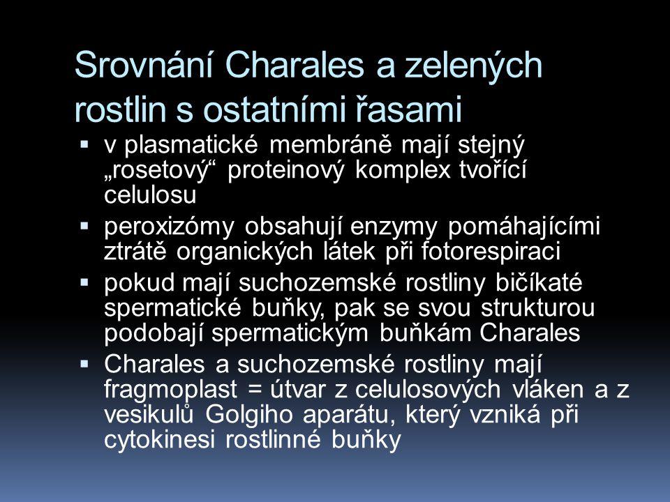 Srovnání Charales a zelených rostlin s ostatními řasami