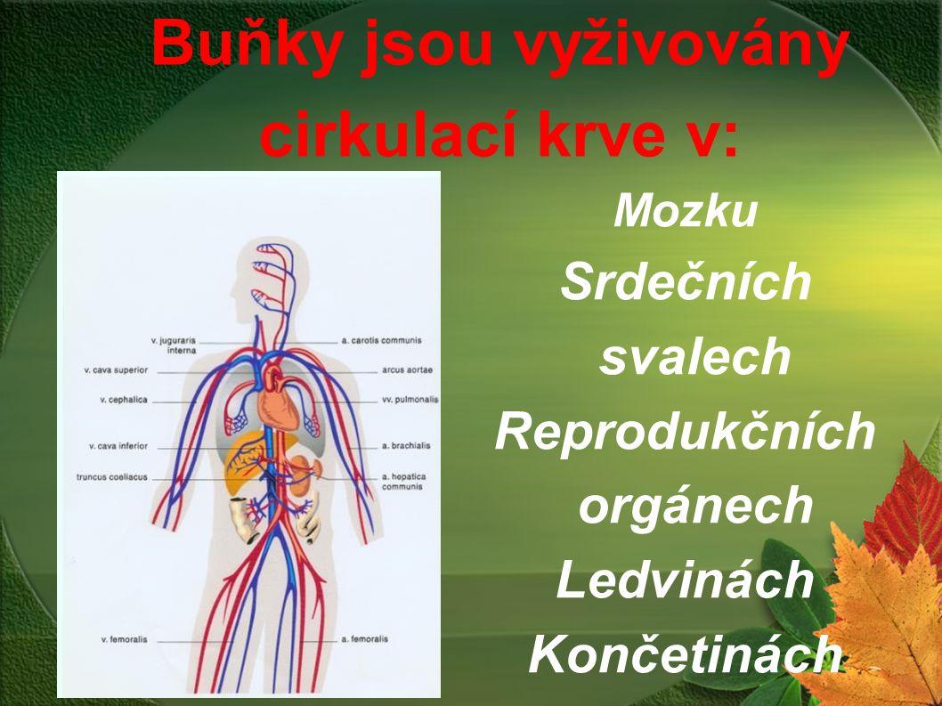 Mozku Srdečních svalech Reprodukčních orgánech Ledvinách Končetinách