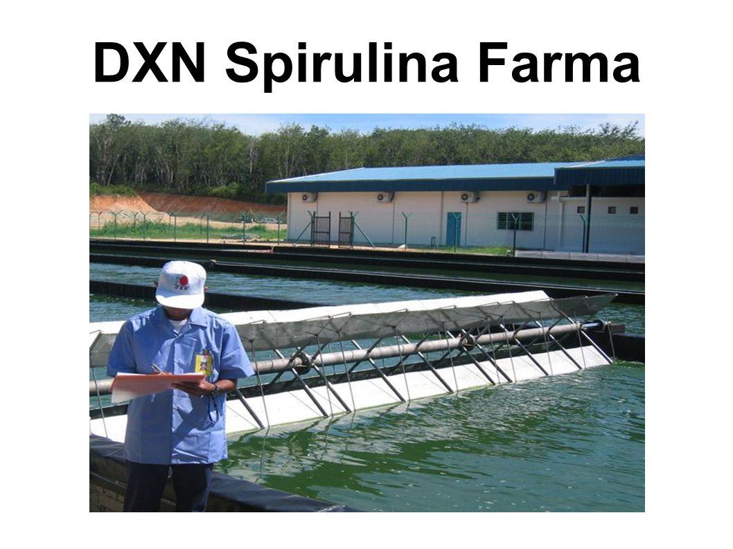 DXN Spirulina Farma