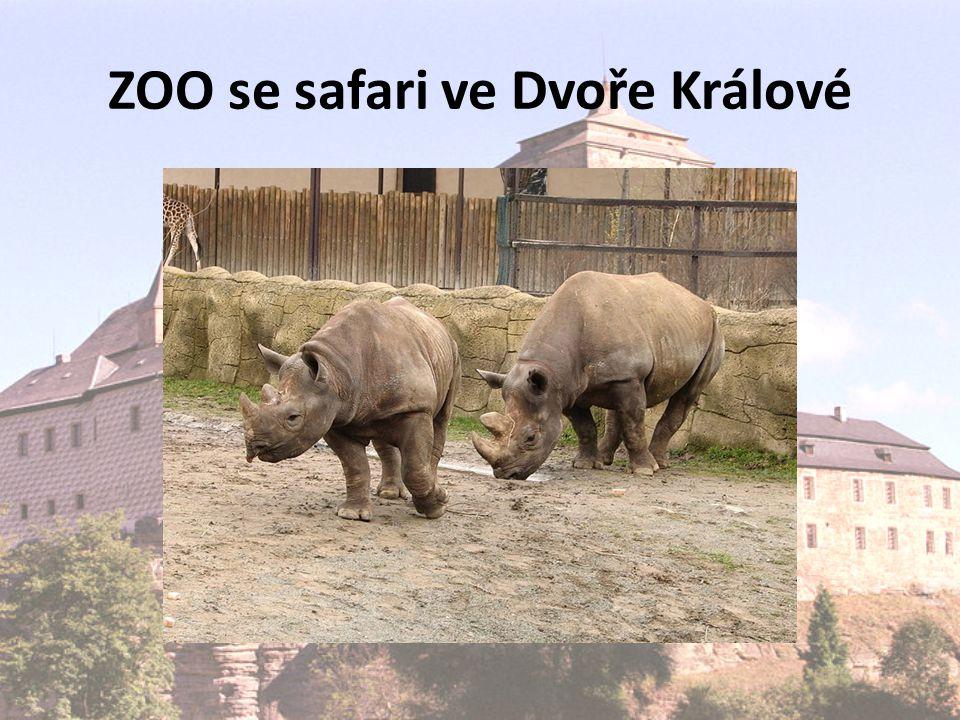 ZOO se safari ve Dvoře Králové