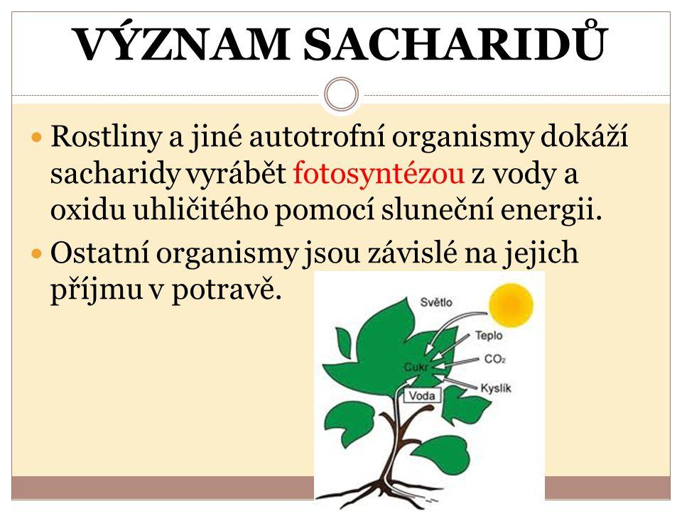 VÝZNAM SACHARIDŮ Rostliny a jiné autotrofní organismy dokáží sacharidy vyrábět fotosyntézou z vody a oxidu uhličitého pomocí sluneční energii.