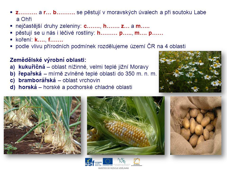 z………. a r… b………. se pěstují v moravských úvalech a při soutoku Labe a Ohři