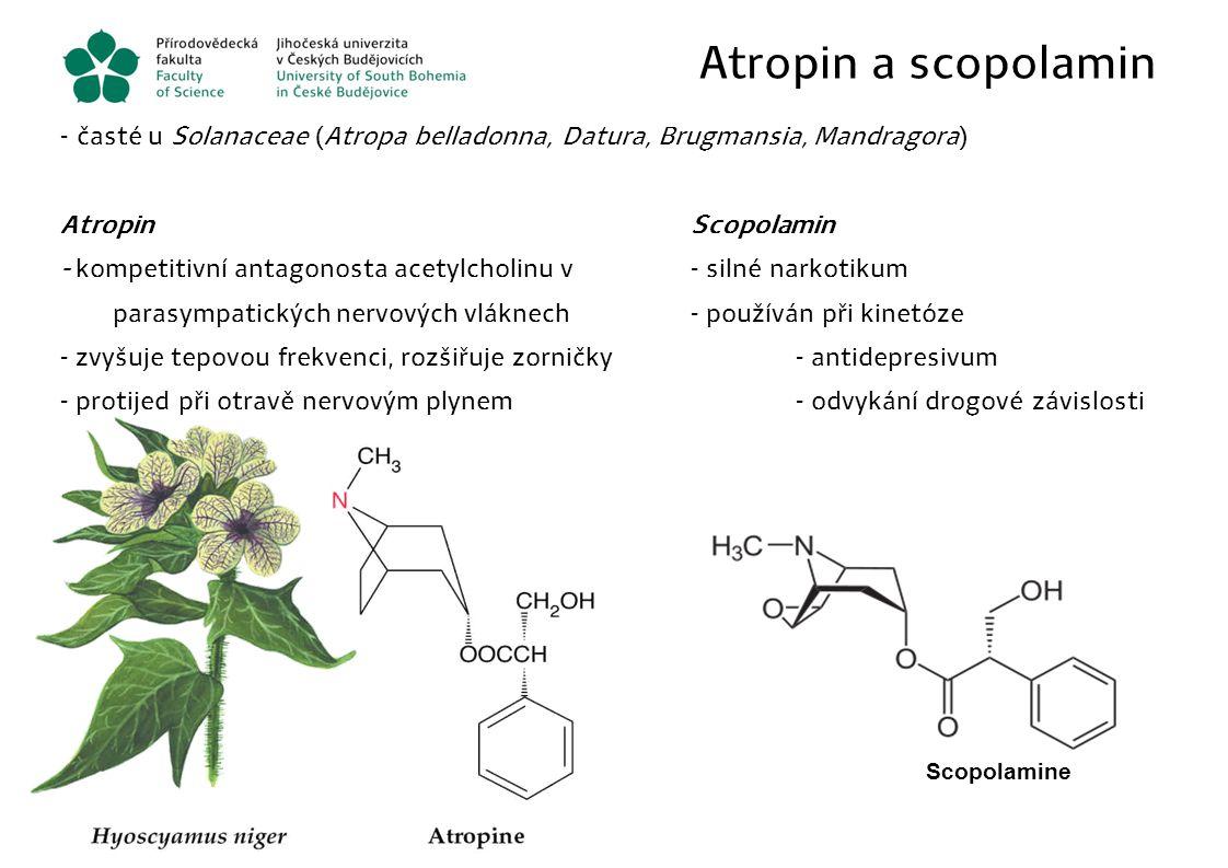 Atropin a scopolamin časté u Solanaceae (Atropa belladonna, Datura, Brugmansia, Mandragora) Atropin Scopolamin.