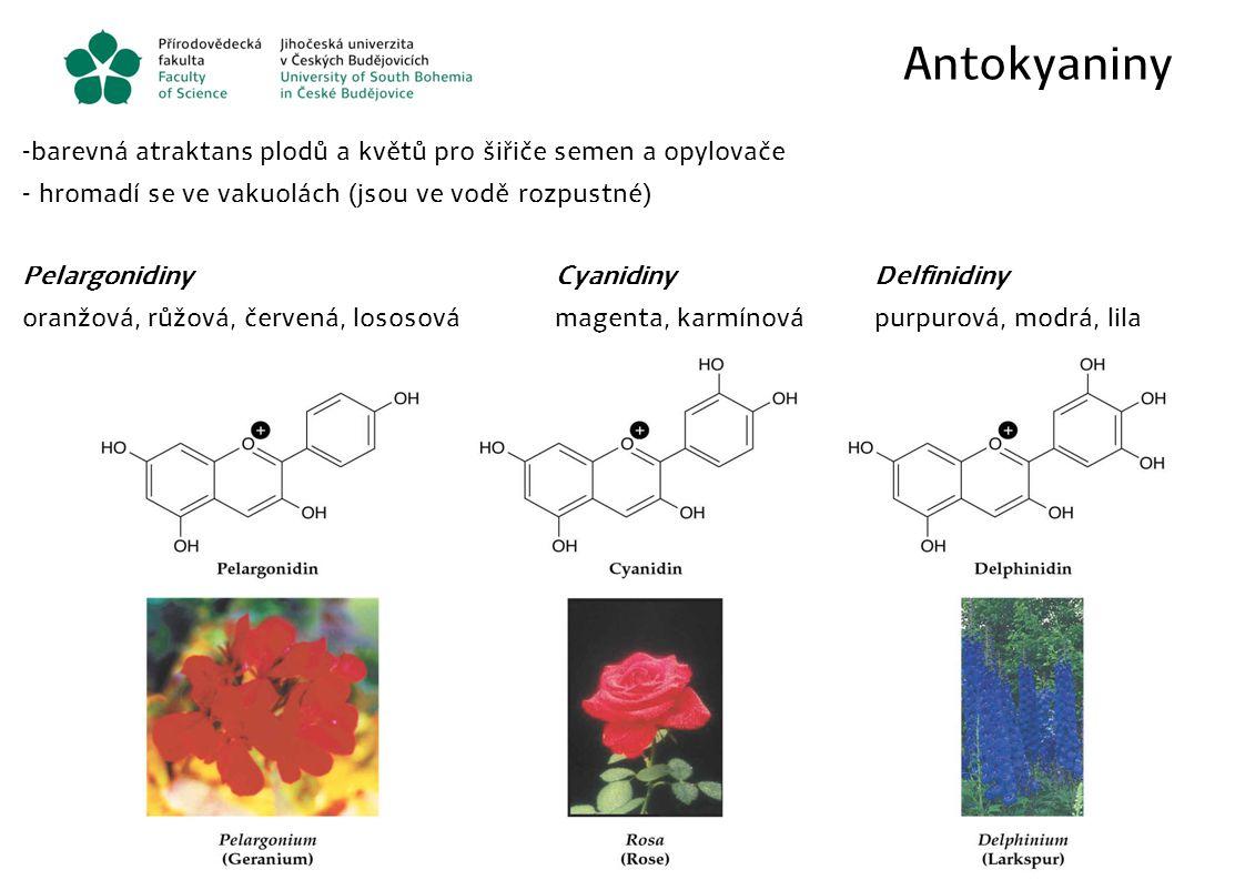 Antokyaniny barevná atraktans plodů a květů pro šiřiče semen a opylovače. hromadí se ve vakuolách (jsou ve vodě rozpustné)