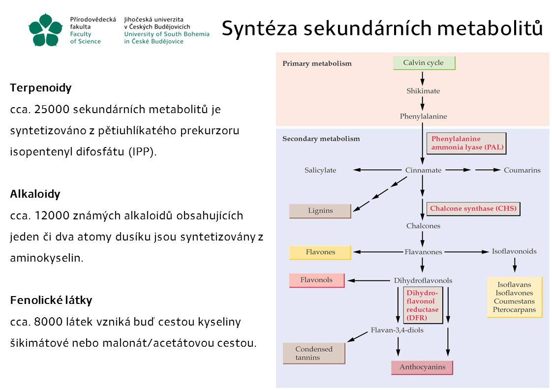 Syntéza sekundárních metabolitů